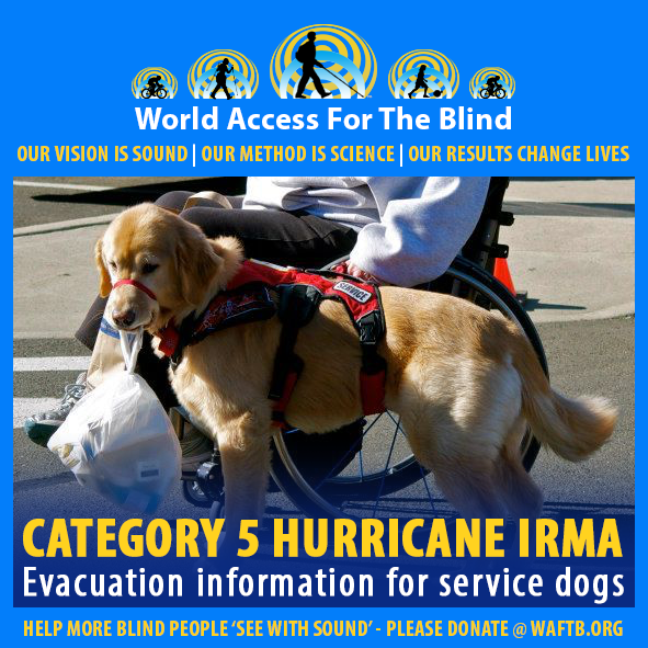 WAFTB Facebook module frames a photo of a harnessed Golden retriever service dog standing next to its master in a wheelchair. Caption: Category 5 Hurricane Irma. Evacuation information for service dogs.